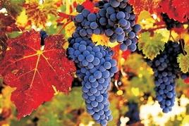 Праздник вина • Карлштейн